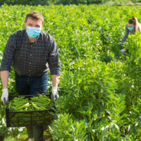 Día Mundial de la Agricultura: alimentar al mundo en plena pandemia
