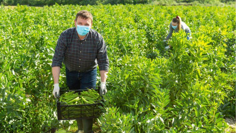 Acuerdo del Consejo de Agricultura para una PAC más verde y equilibrada