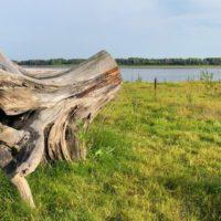 La contaminación pasada de Siberia afecta a la vegetación actual