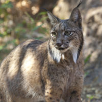 Las medidas de conservación han salvado a más de 40 especies