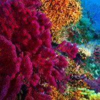 Los servicios ecosistémicos de los arrecifes de coral caen un 50%