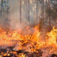 Los incendios funden Siberia en una temporada infernal
