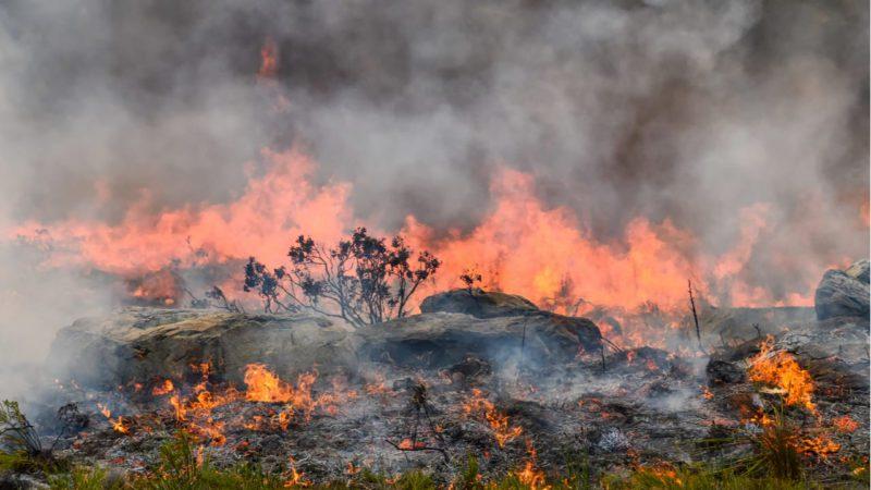 Los incendios remiten en África Central por la falta de vegetación