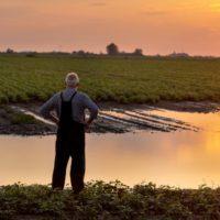 Genética para lograr cultivos resistentes a las inundaciones