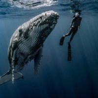 El mar agradece el activismo por el planeta