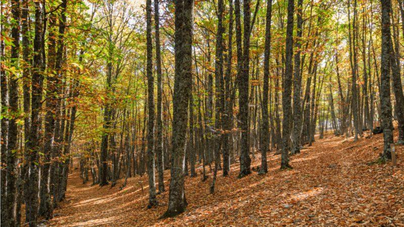Comienza con frío y lluvias un otoño que será más seco y cálido de lo habitual