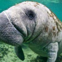 Los ecosistemas de agua dulce son los que más fauna pierden