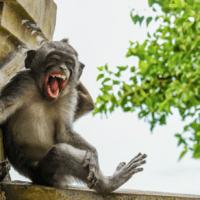 'Comedy Wildlife Photography Awards', las fotografías más divertidas del mundo animal