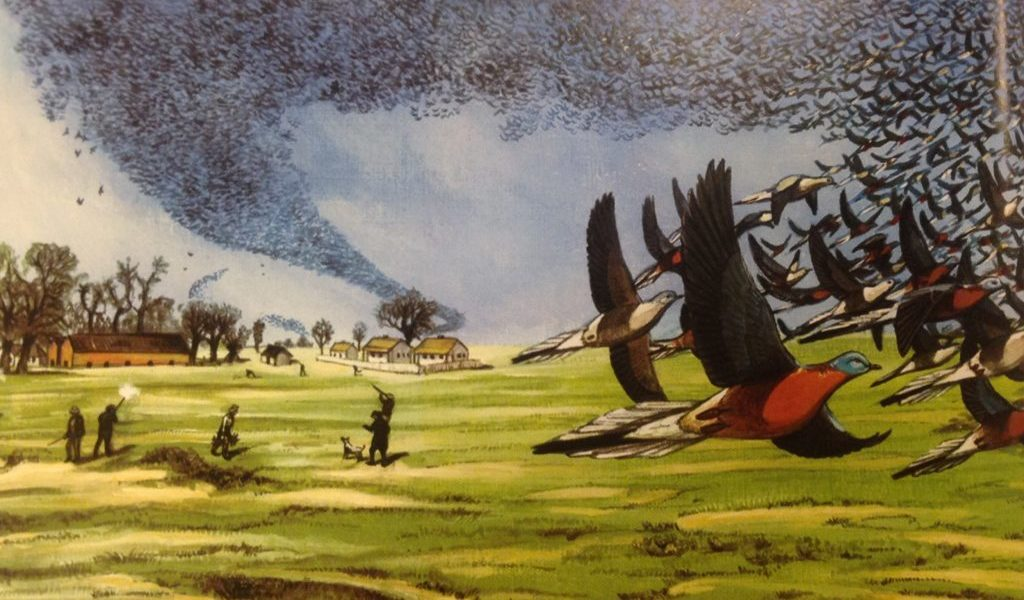 Así extinguimos a la paloma migratoria americana