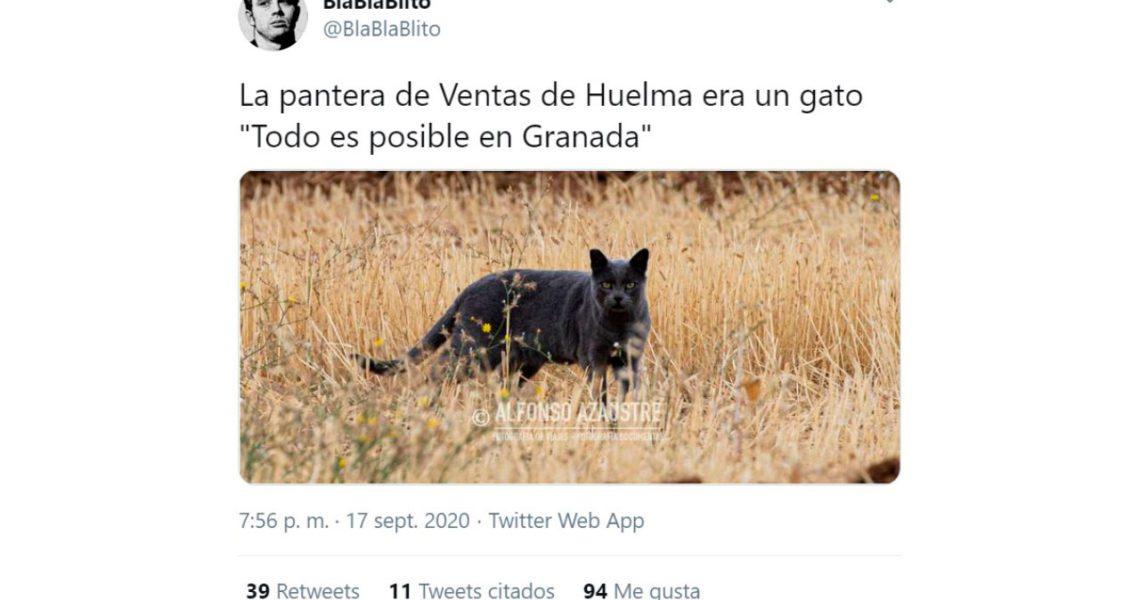 La pantera negra de Granada