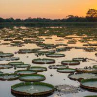 Brasil retira la protección medioambiental sobre manglares y dunas