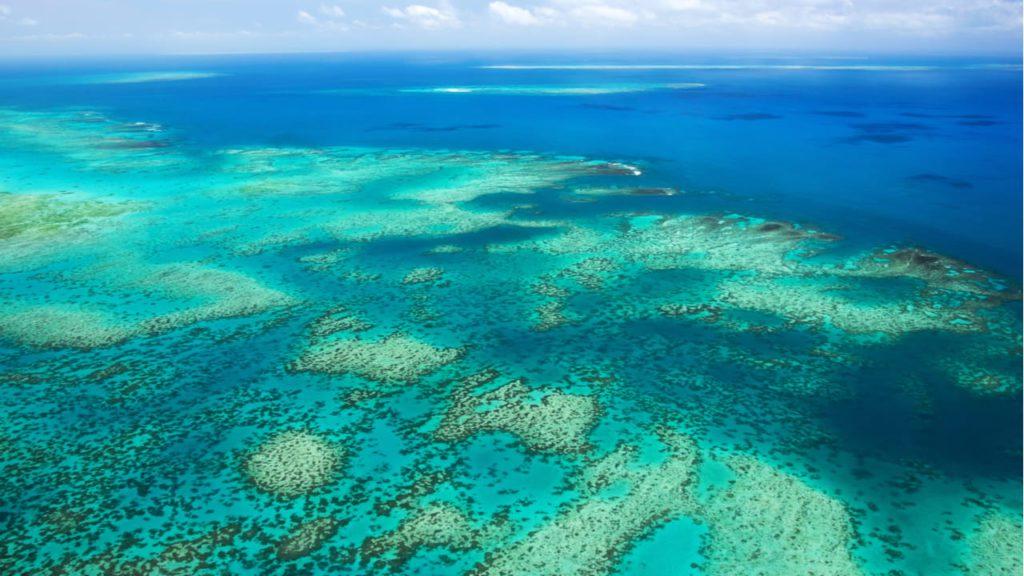 arrecife de coral, juntos