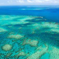 Descubren un arrecife de coral de más de 500 metros de altura