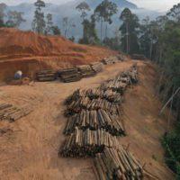 El bosque infinito ('Barkskins'): la deforestación y sus consecuencias
