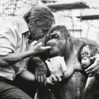 ¿Por qué nos gusta tanto David Attenborough?