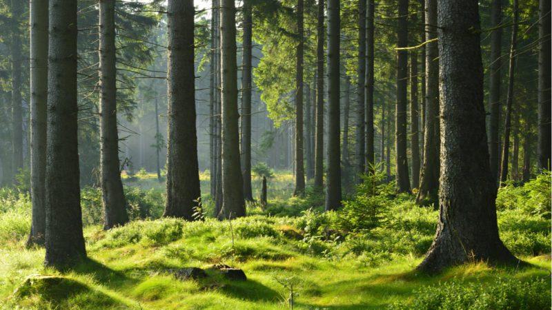 Restaurar el 30% de ecosistemas prevendría el 70% de las extinciones