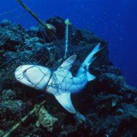 Las 'redes fantasma' suponen el 10% de la basura marina