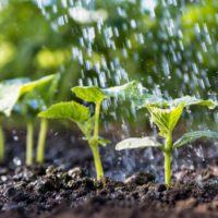 La FAO alerta de que cada vez hay menos agua para la agricultura