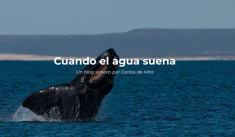 Así suenan las ballenas francas australes