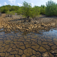 Las sequías provocarán daños irreversibles en los humedales