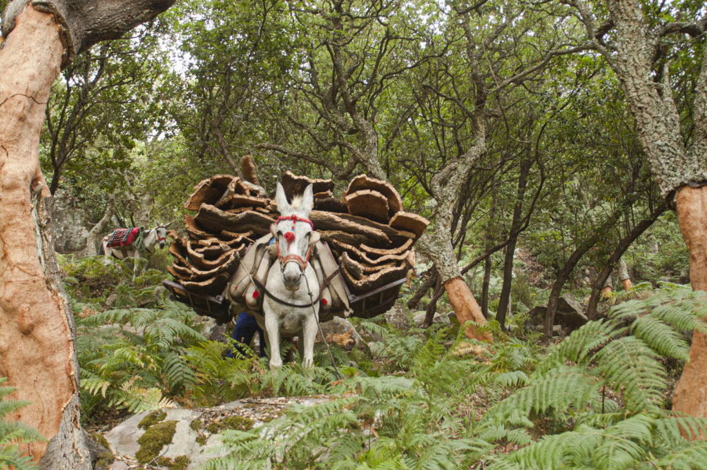 Fotograma de la película Dehesa, con la saca del corcho en un monte de alcornoques.   Foto: Herminio Muñiz