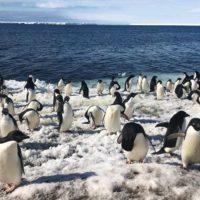 Los drones revolucionan el conteo de pingüinos en la Antártida