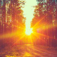 La ONU lanza un fondo semilla para impulsar la inversión privada en bosques