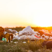 Bruselas prohibirá cualquier tipo de químico tóxico con el medio ambiente