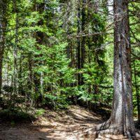 El plan para reforestar Estados Unidos con 855 millones de árboles