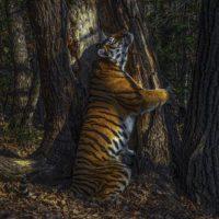 La magia de la naturaleza brilla en el Wildlife Photographer of the Year