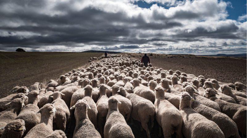 Los últimos pastores celebran la fiesta de la trashumancia