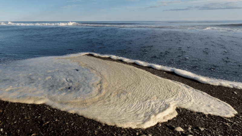 Un vertido tóxico acaba con la fauna marina de una bahía rusa