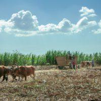 """Centroamérica, región """"perfecta"""" para un laboratorio climático"""
