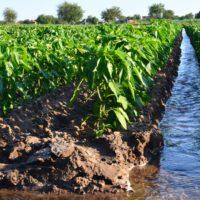 Los regantes no pueden asumir nuevas subidas en el precio del agua