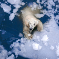 La temperatura media del Ártico ya ha subido 1,9ºC