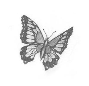 Ilustración de una mariposa del libro Terra insecta (Ed. Ariel), de la bióloga noruega Anne Sverdrup-Thygeson. | CRÉDITO: Editorial Ariel