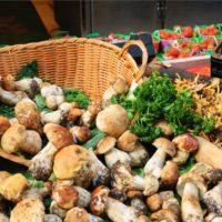 Un mercado mundial de hongos 'Made in Spain', más cerca que nunca
