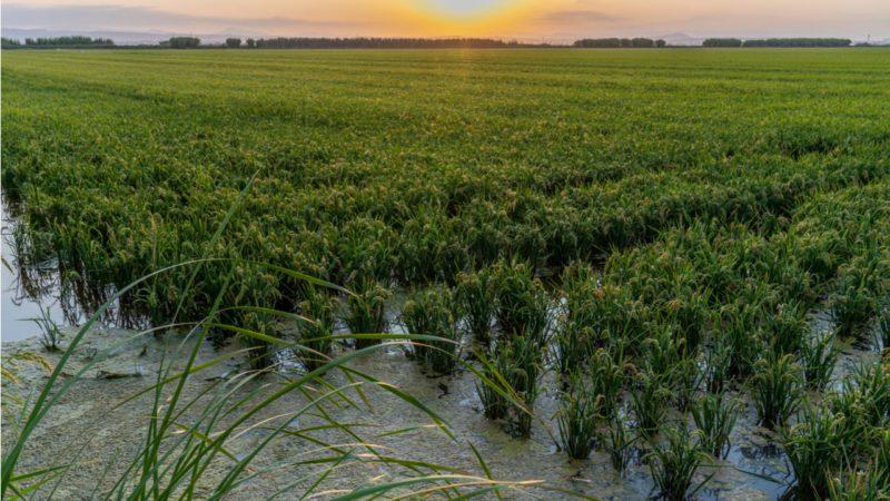 Una agricultura 100% ecológica comprometería la alimentación