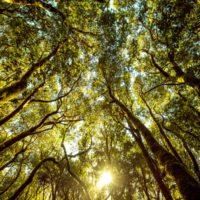 Los bosques absorben al año 1,5 veces las emisiones de CO2 de EEUU
