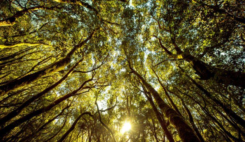 Regresar al bosque para impulsar la economía verde