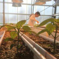 Una investigación española sobre las raíces de las plantas es portada de 'Science'