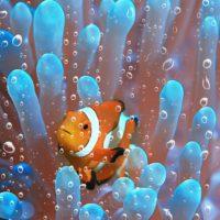 2040: la década en la que se blanquearán los corales, según el PNUMA