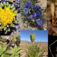 Los botánicos españoles describen 43 nuevas especies de plantas durante este año