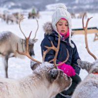 Los renos de Santa Claus se quedan solos en Navidad