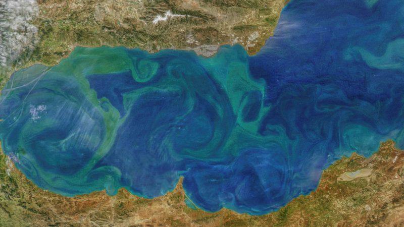 El cambio climático ya afecta al plancton del Mediterráneo