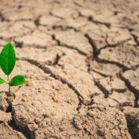 La falta de agua reduce el efecto fertilizante del CO2