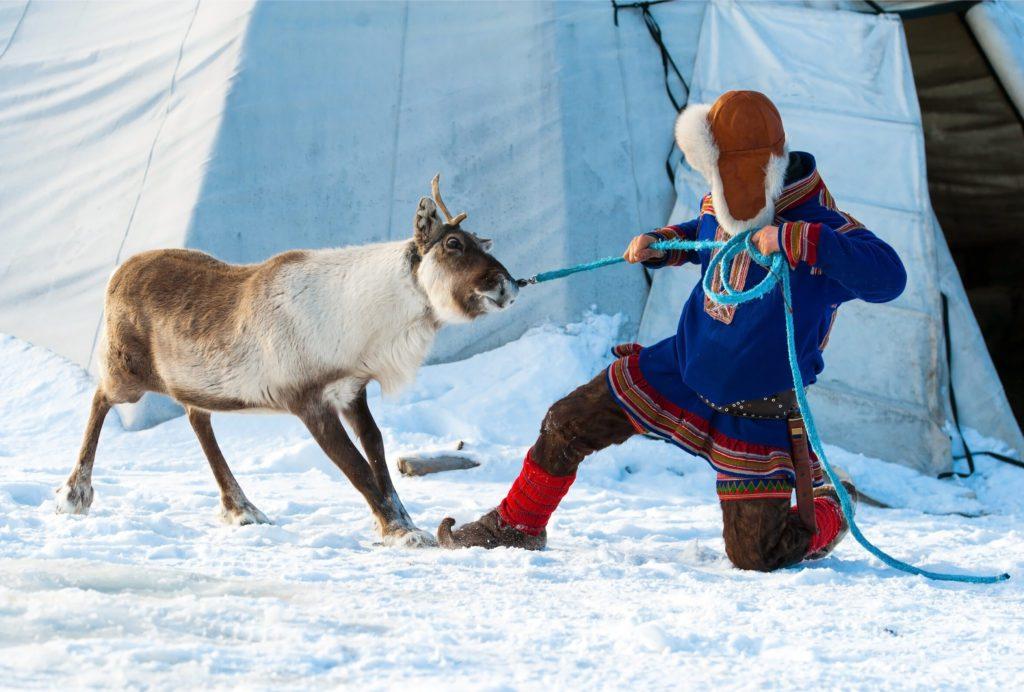 Seguir la tradición en el manejo de los renos es muy importante para los sami/ Foto: V. Belov