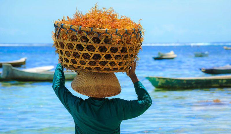 La CE apuesta por crear un sector de algas 'fuerte y sostenible'
