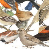 Las mejores ilustraciones científicas y de naturaleza, a concurso