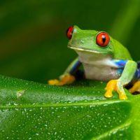 One Planet Summit, una cumbre en favor de la biodiversidad